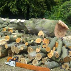 Our Tree Work Gallery`